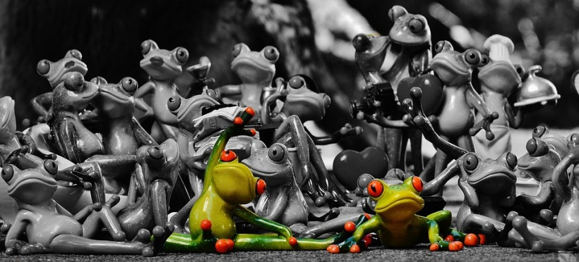 frogs-1413787_960_720
